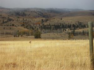 nicola ranch