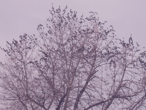 birds roosting