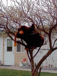 bear in tree copy