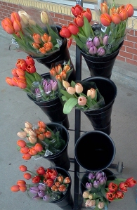 Signs of spring outside Coopers this week.