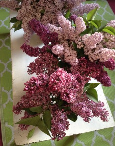 Cutting lilacs for bouquets helps to prune! Bring them inside!