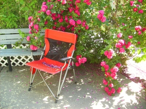 roses on patio