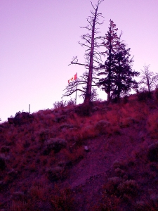 flagpole-pink