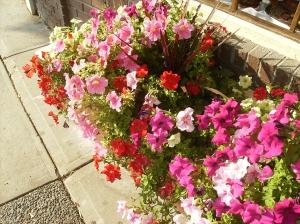 Flower boxes at Black's