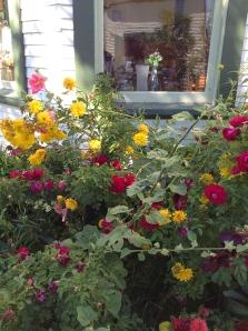beautiful Baillie House flowers