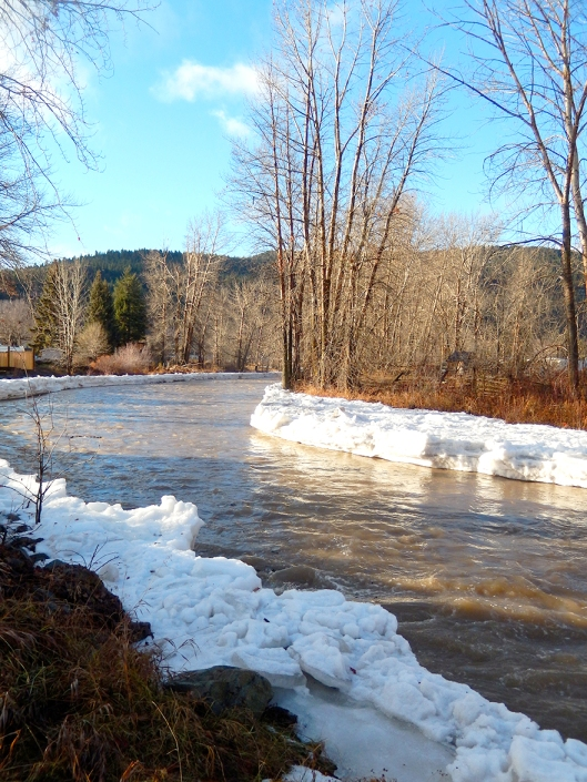 With temps up to 10°C this week, the Coldwater River was on the rise.