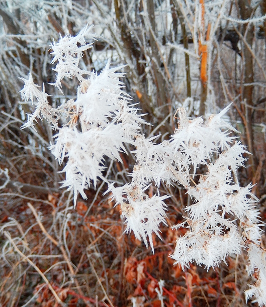 Big fat crystals clung to every branch in the valley, after last weekend's frozen fog.