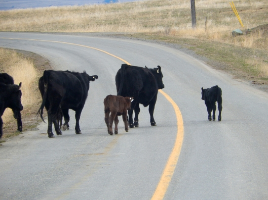 Spring shows its abundance, with calving time.