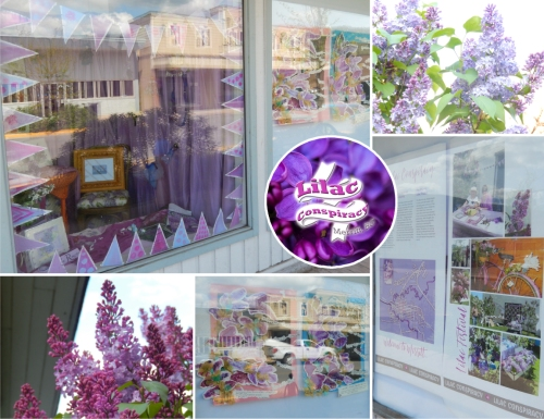 Lilac Conspiracy window dressing at the corner of Garcia & Granite. This is one of the best lilac years EVER!!