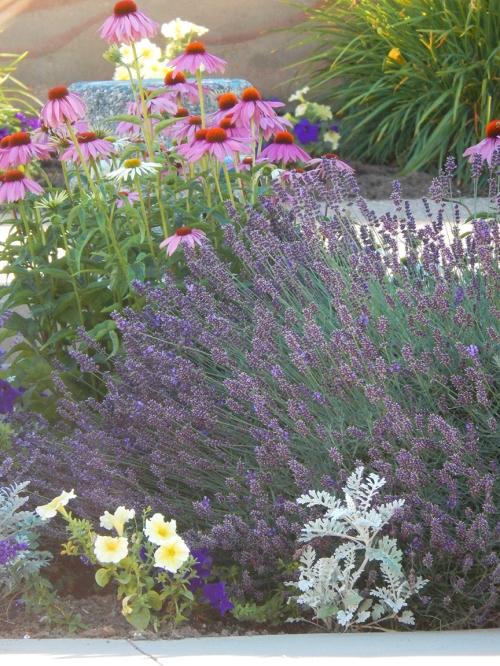 summer flowers at spirit square