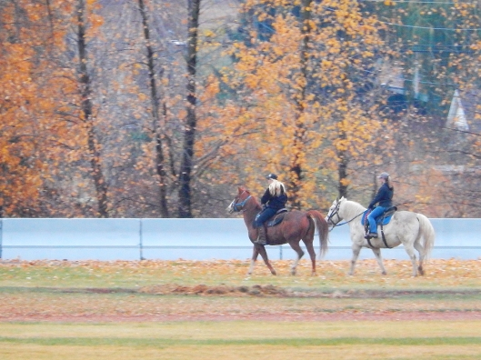 These park riders are a rare sight in Merritt, now. Only a few years ago, horses & riders were  routinely seen out & about. Beautiful reminder of the heritage of the place!