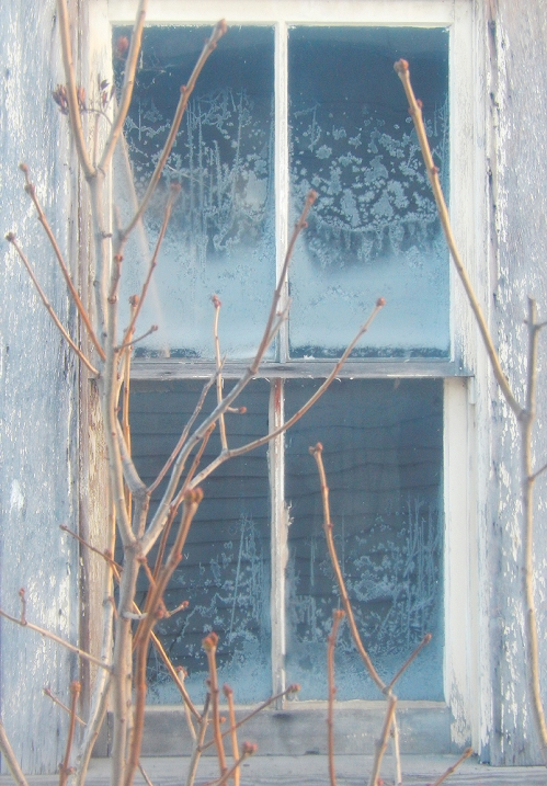 The BIG cold's gone for now... and the lilac buds that set in fall are a reminder of spring to come - eventually!